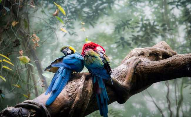 Bird Of Paradise Hd Wallpaper Conservar A Amaz 244 Nia 233 Quest 227 O Ambiental Social E Econ 244 Mica