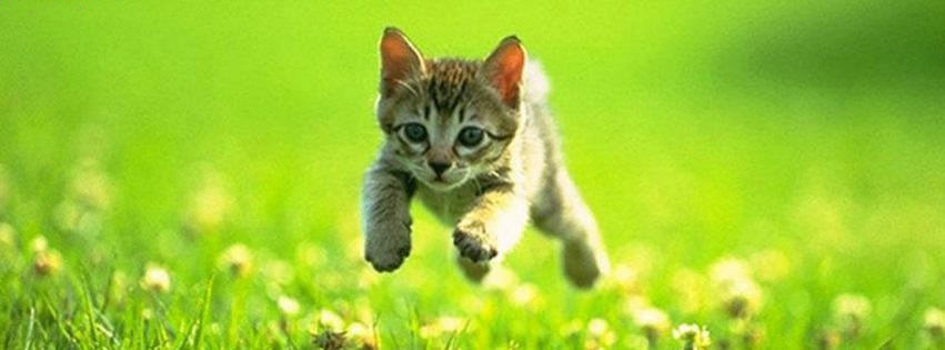 Cute Kitty Cat Wallpapers 100 Cute Cat Amp Kitten Cover Photo For Facebook Timeline