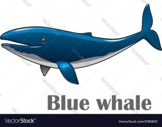 Cartoon blue whale Royalty Free Vector Image VectorStock