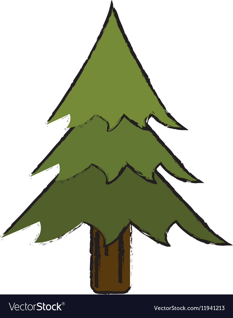 drawing pine tree forest
