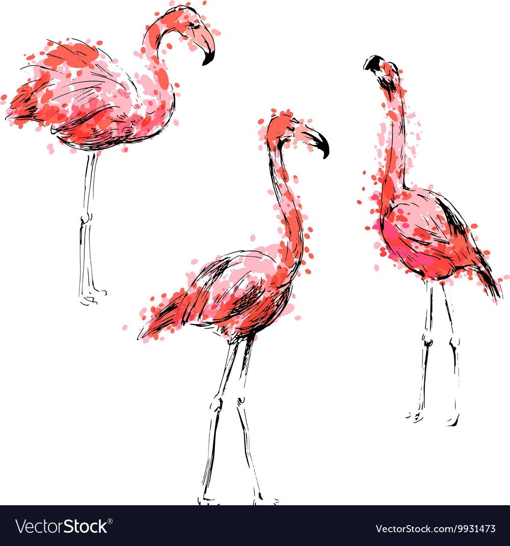 colored hand drawing flamingos