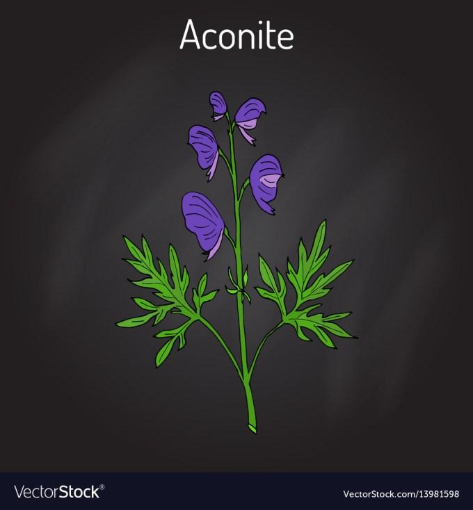 Aconite Aconitum Napellus Flowering Plant Vector Image