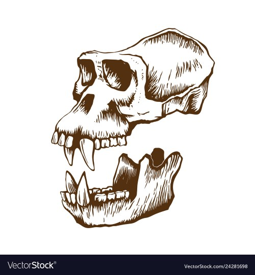 small resolution of monkey skull diagram