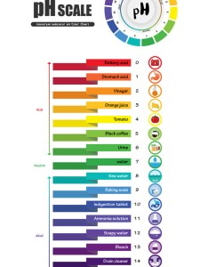 also ph scale universal indicator color chart vector image rh vectorstock