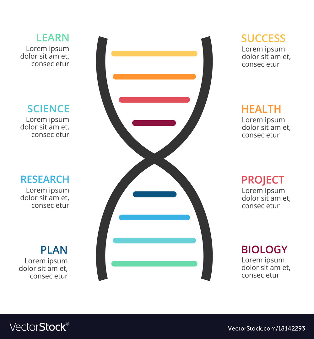 hight resolution of dna science infographic medical diagram vector image