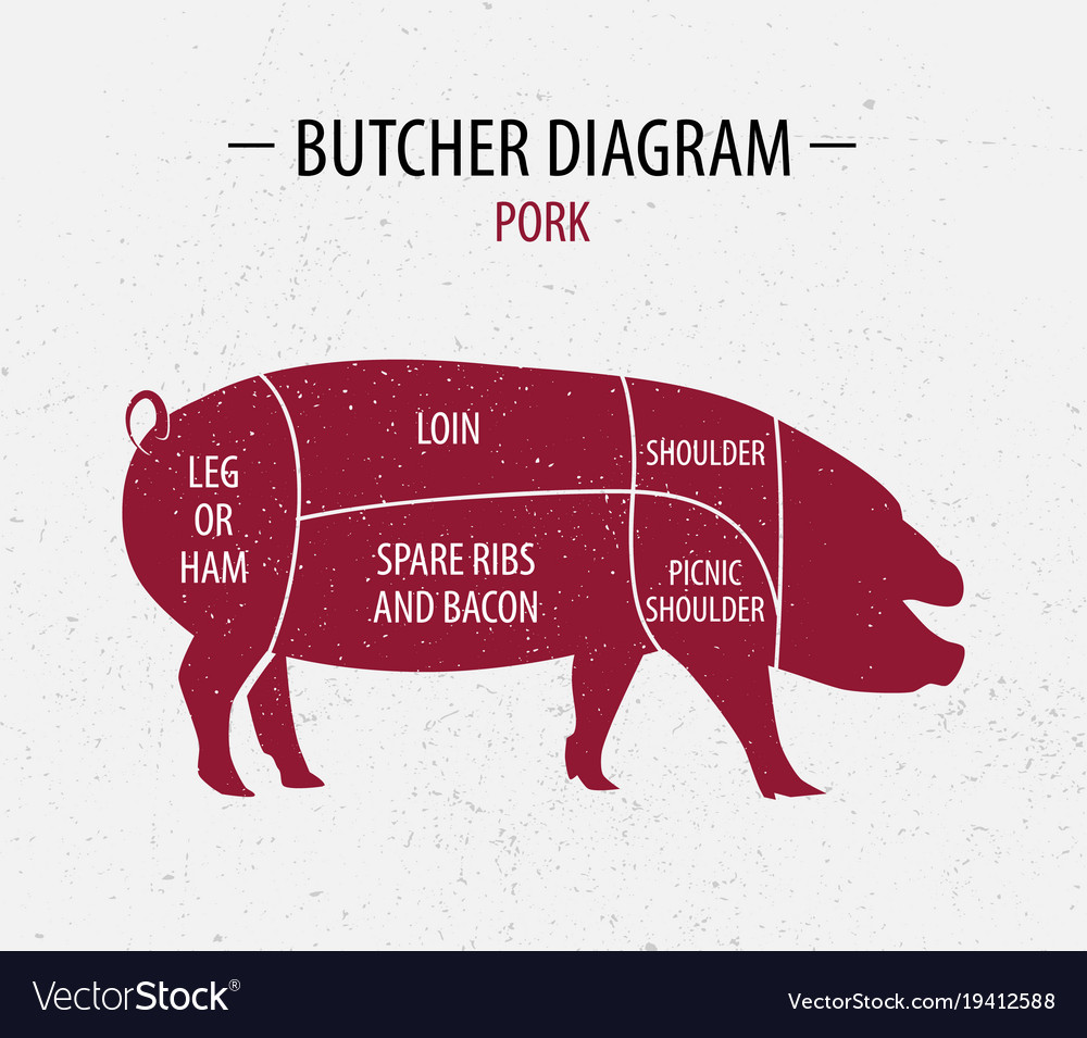 pig cuts diagram tao 110 atv wiring cut of pork poster butcher royalty free vector image