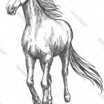 Horse Pencil Sketch Images Chelss Chapman
