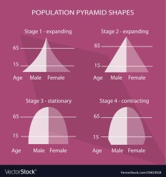 four different types of population pyramids charts vector image [ 1000 x 1079 Pixel ]