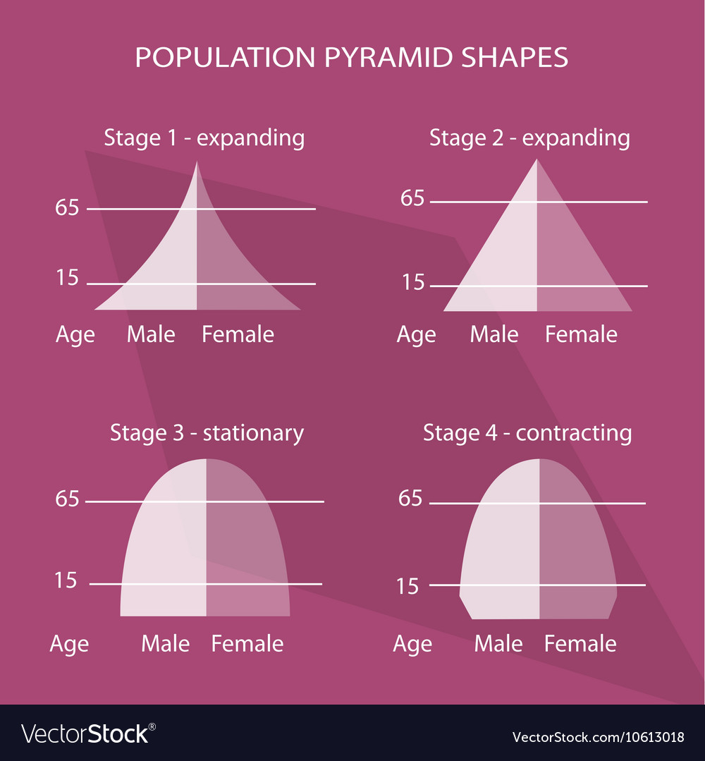 hight resolution of four different types of population pyramids charts vector image