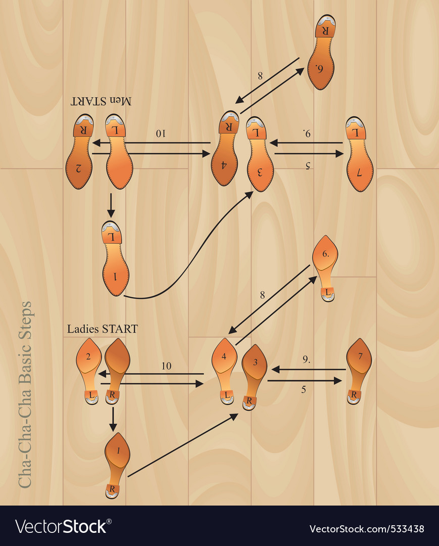 hight resolution of chacha basic steps vector image