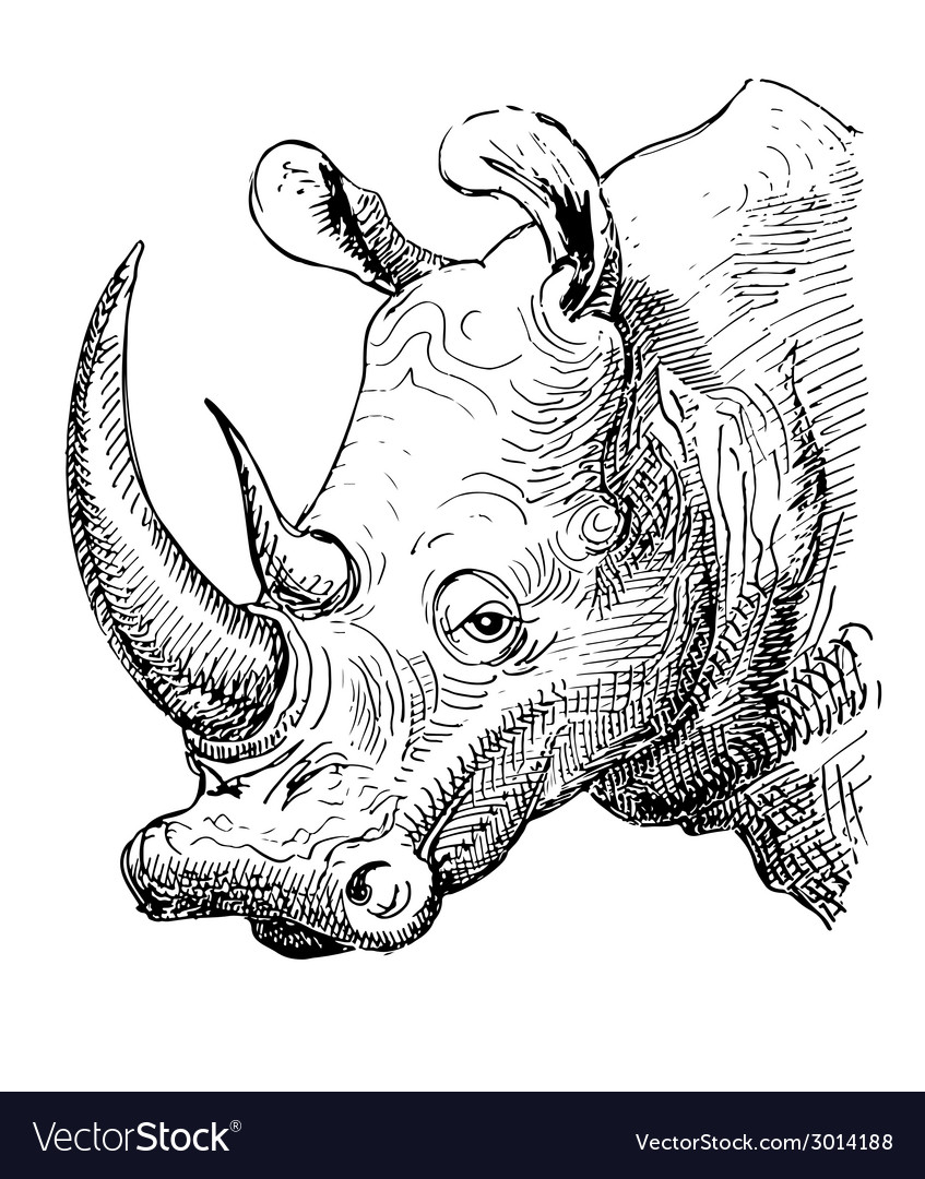 artwork rhinoceros sketch black