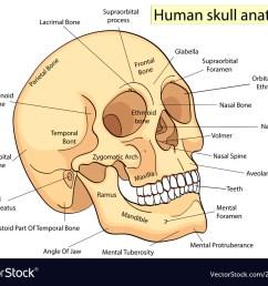 medical education chart of biology human skull vector image human skull diagram eye socket human skull diagram [ 1000 x 830 Pixel ]