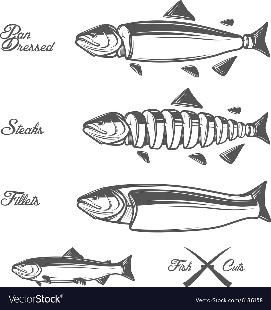 hight resolution of salmon cuts diagram vector image