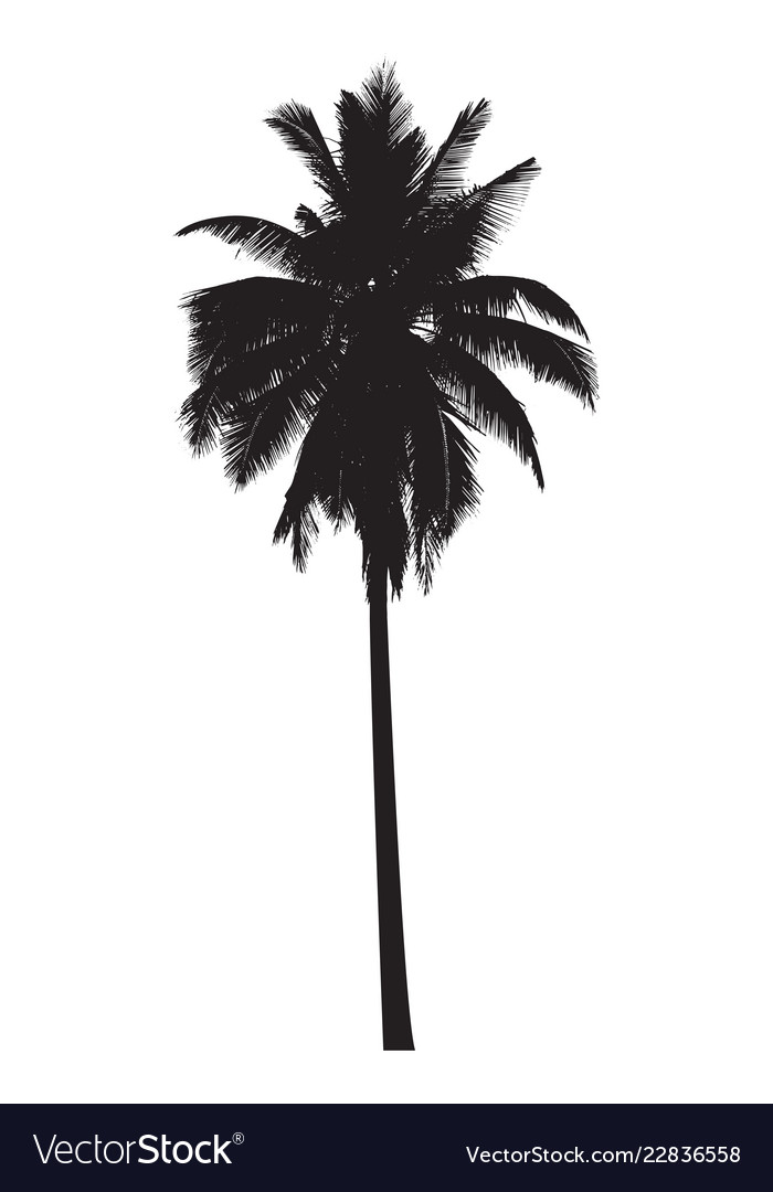 Palm Tree Vector Art : vector, Graphic, Royalty, Vector, Image, VectorStock