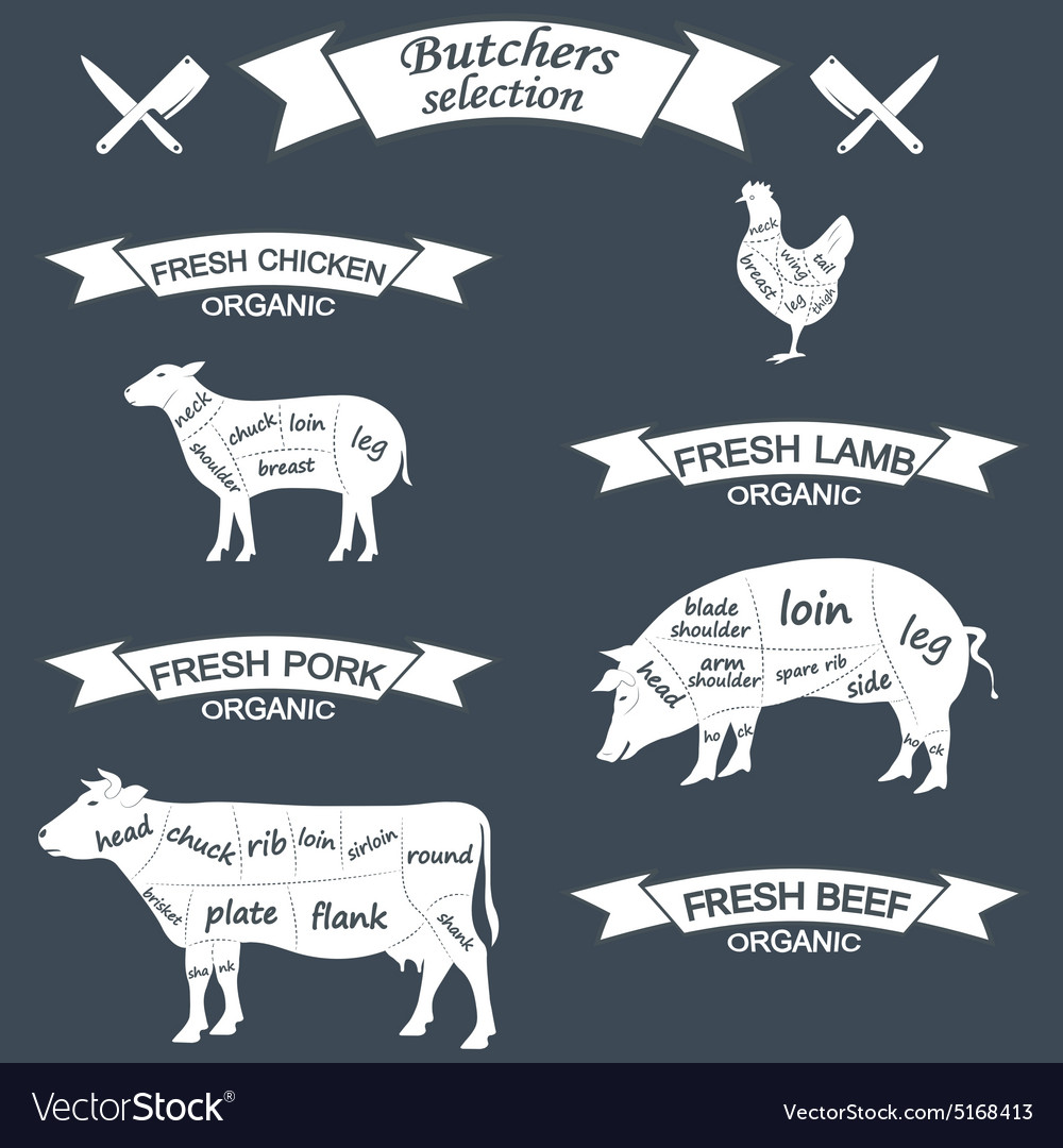 hight resolution of pig arm diagram wiring diagram todays pig head diagram pig arm diagram