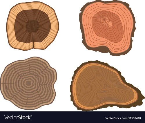 small resolution of tree slices set