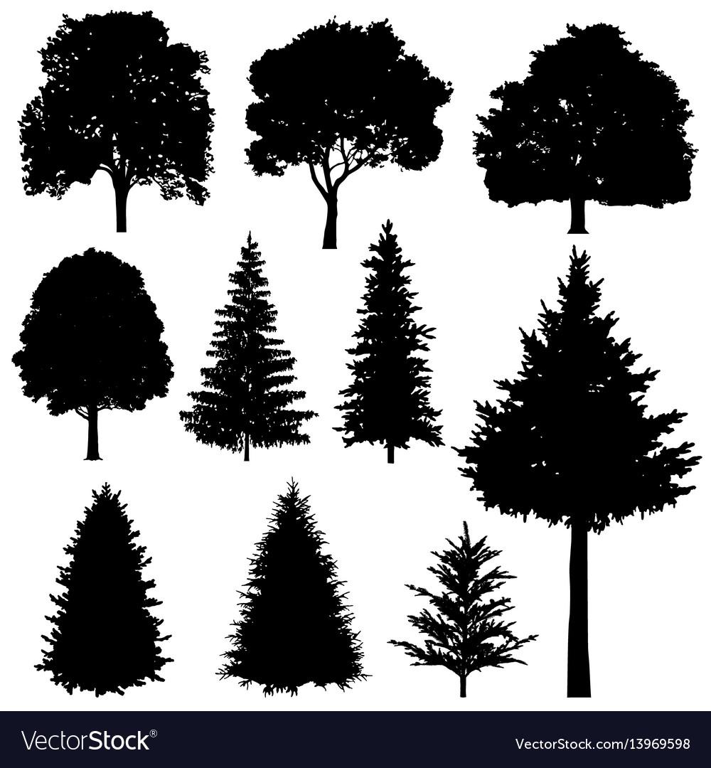 forest coniferous and deciduous