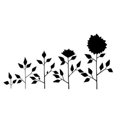 Sunflower plant growth stages coloring Royalty Free Vector