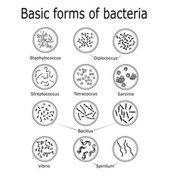 Streptococcus Vector Images (67)