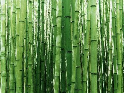 bambu Tradiciones de Año Nuevo alrededor del mundo