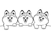 Disegni di Cani da Colorare  Acolorecom