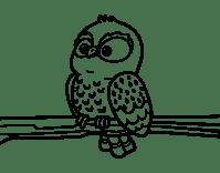 Disegno di Gufo su un ramo da Colorare - Acolore.com