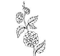 Disegno di Ramo fiorito da Colorare - Acolore.com