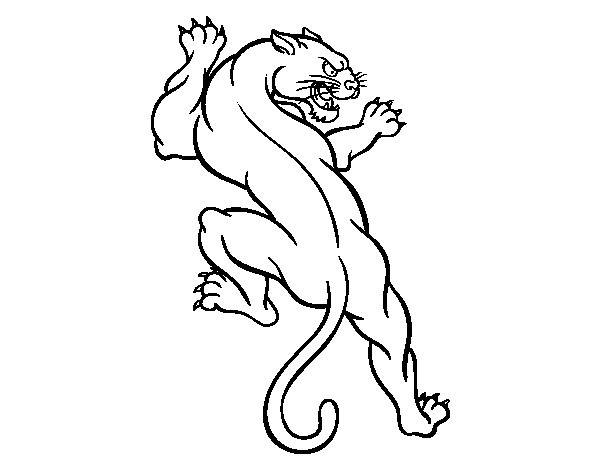 Sudade Puma Pages Coloring Pages