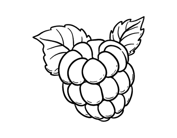 Raspberry coloring page - Coloringcrew