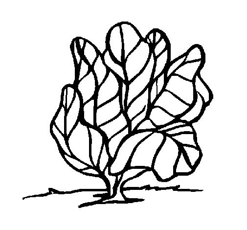 Espinafre Desenho Para Colorir E Pintar