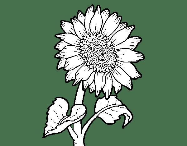 Desenhos De Couve Para Colorir
