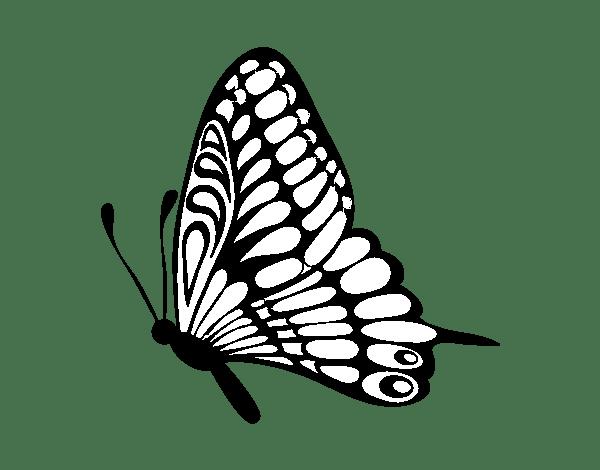 Dibujo de Mariposa dirección izquierda para Colorear