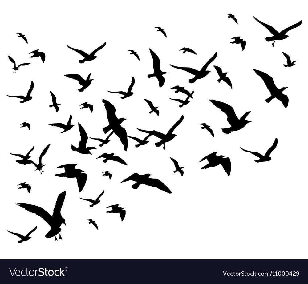 flying birds flock isolated
