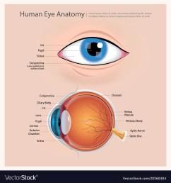 human eye anatomy vector image [ 1000 x 1080 Pixel ]