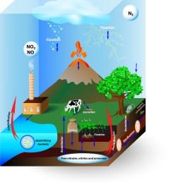 nitrogen cycle vector image [ 819 x 1080 Pixel ]