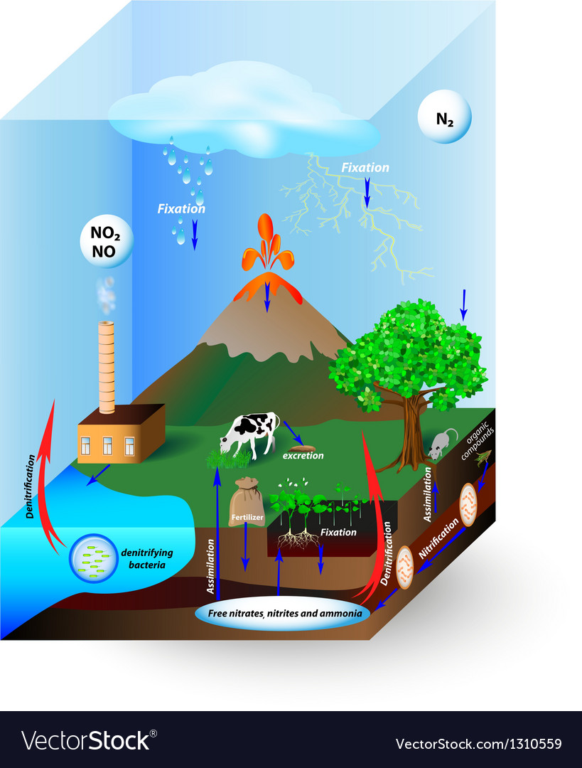 hight resolution of nitrogen cycle vector image