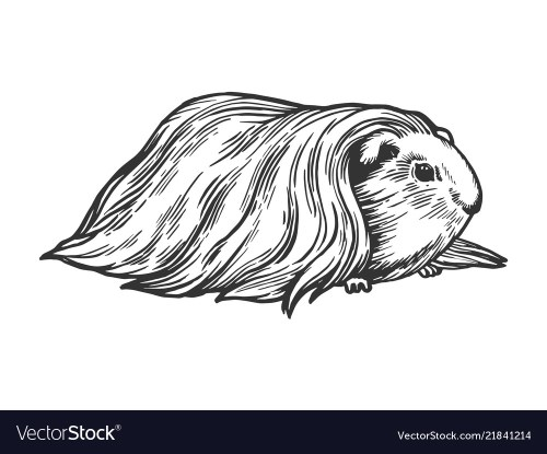 small resolution of guinea pig cavy animal engraving vector image