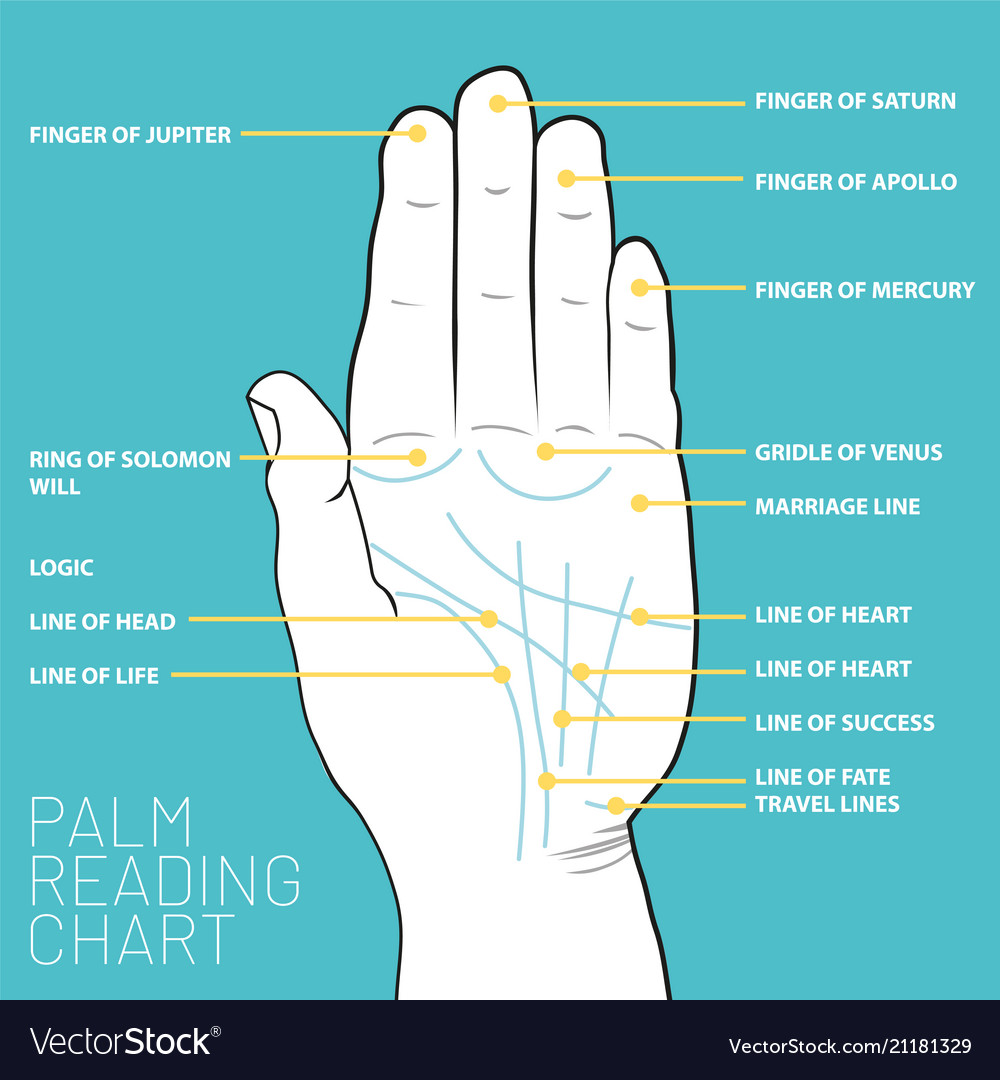 hight resolution of palm reading diagram