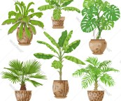 tropical potted plants