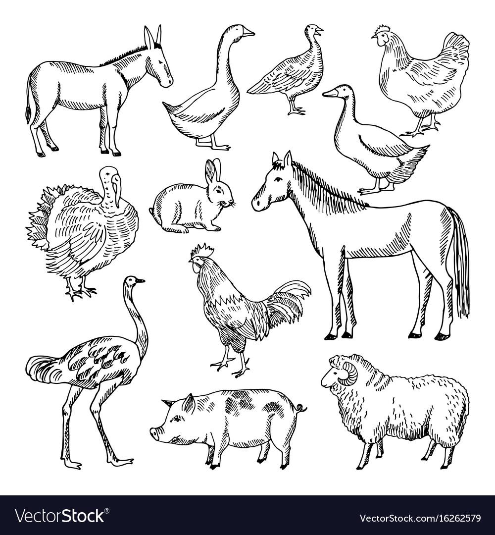 farm animals set in