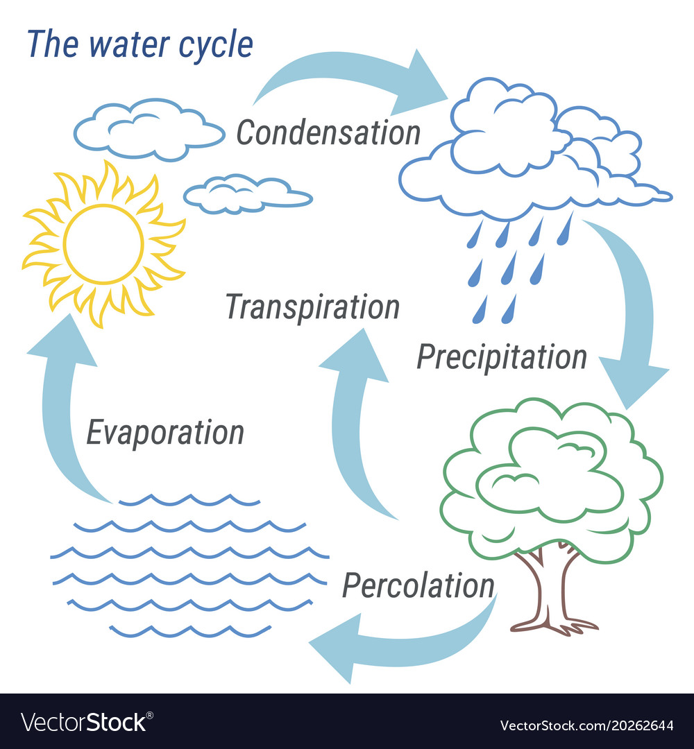 hight resolution of water cycle line vector image