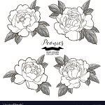 Japanese Peony Tattoo Drawing Vector Images 30