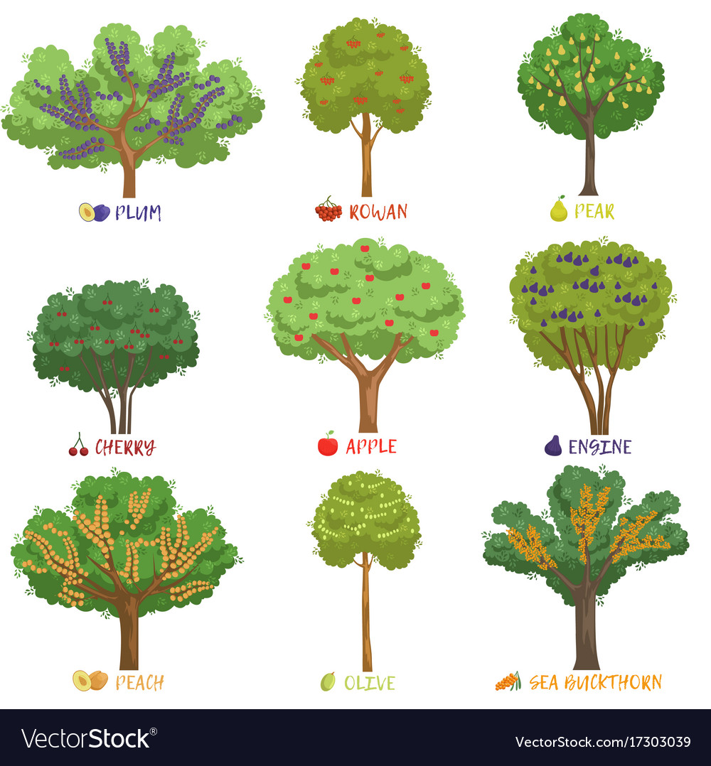 different fruit trees sorts