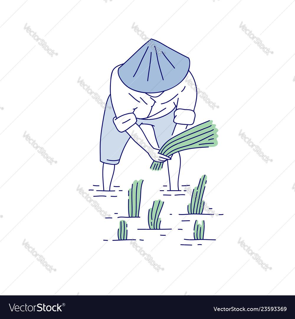 medium resolution of sketch diagram of rice plant