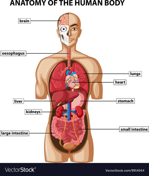 small resolution of human large intestine diagram