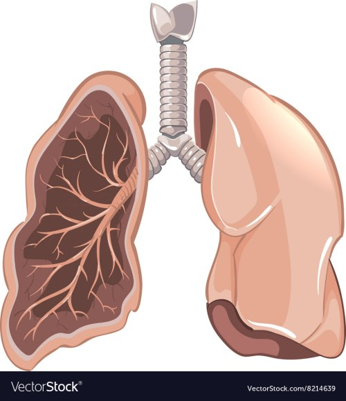 small resolution of human lungs anatomy cancer diagram vector image