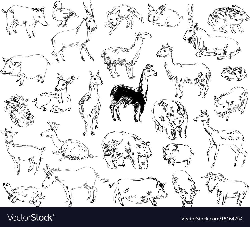 wild animals zoo set