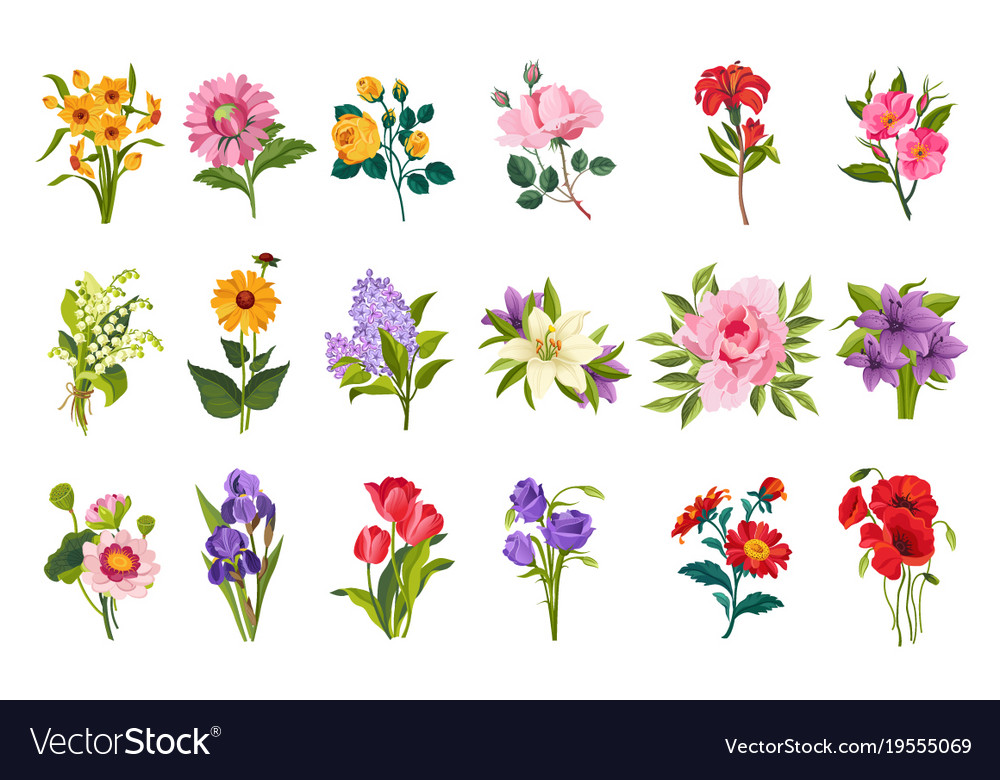 Garden Flowers Collection Royalty Free Vector Image
