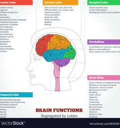 human brain anatomy and functions vector image [ 1000 x 1019 Pixel ]
