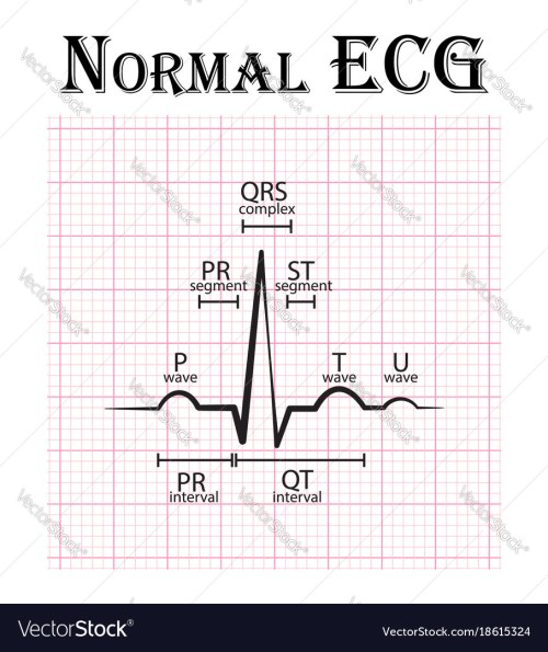 small resolution of normal electrocardiogram vector image
